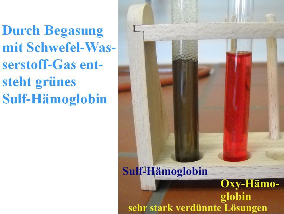 Sulf-Haemoglobin d. H2S ist gruen